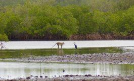 Immersion dans le delta du Saloum, au royaume de la mangrove