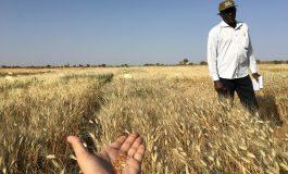 Exportations de blé: la France peine à reconquérir le marché africain