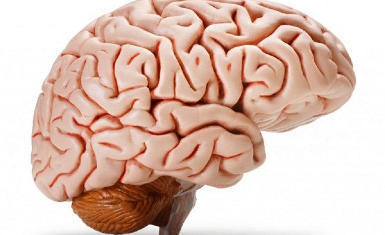 On utilise 100 % de notre cerveau en permanence