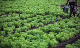 Bélal Altiné Sow, ancien modou-modou parie sur le business agricole à Kolda