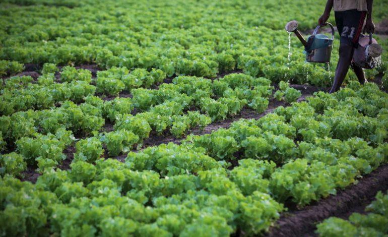 Forte croissance de la production agricole en Afrique sub-saharienne d'ici 2027