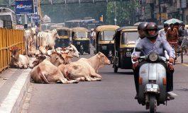 Un homme battu à mort par la foule en Inde, soupçonné d'avoir tué une vache