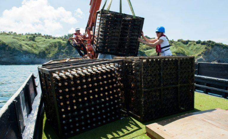 Faire du vin sous la mer, la niche qui monte en Espagne