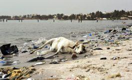 L'effrayante pollution de la baie de Hann