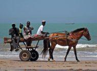 Une étude évalue à 544.000 chevaux et 462.000 ânes le nombre d'équidés présents au Sénégal