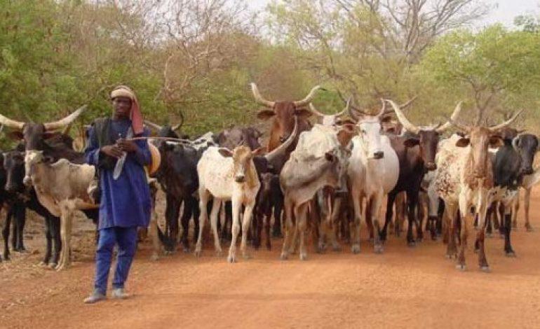 Macky Sall alloue 1 milliard  CFA aux éleveurs victimes des intempéries