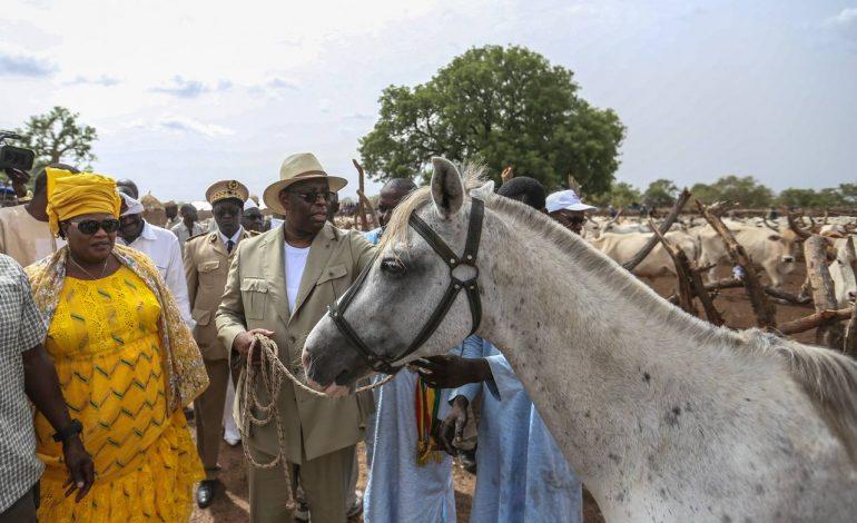 22.996 têtes de bétail décimées lors des intempéries de la semaine dernière au Sénégal