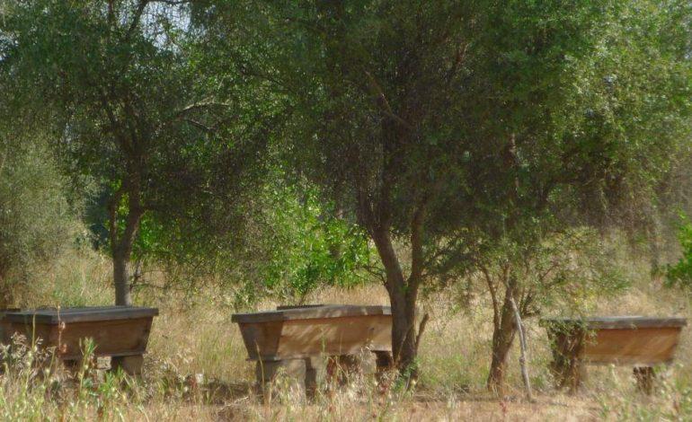 Une bande verte de vingt cinq mille arbres sera érigée par un projet de la Croix rouge entre Thiès et Tivaouane