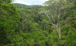 Les quatre sénégalais disparus en Casamance dans la forêt de Boutoupa Camaracounda toujours introuvables