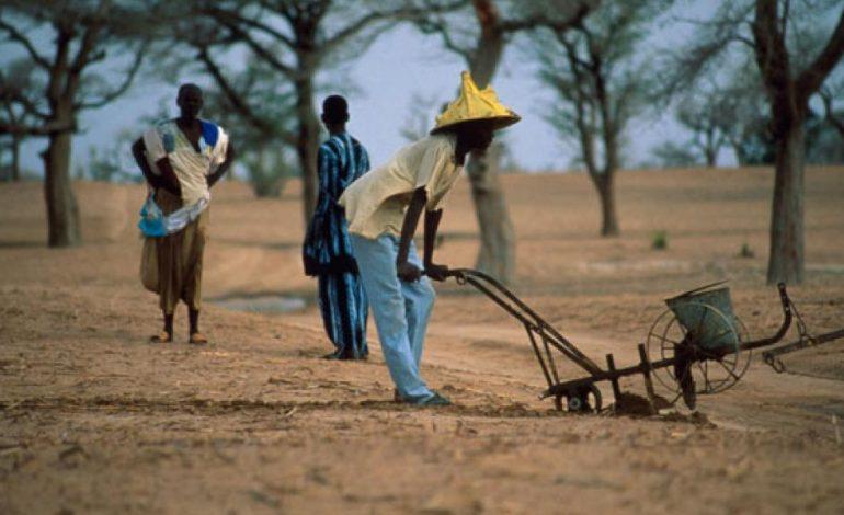 Le retard de la pluie inquiète les agriculteurs sénégalais