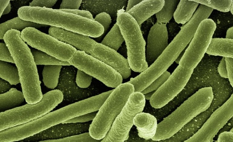 Une bactérie potentiellement mortelle se propage insidieusement dans les hôpitaux