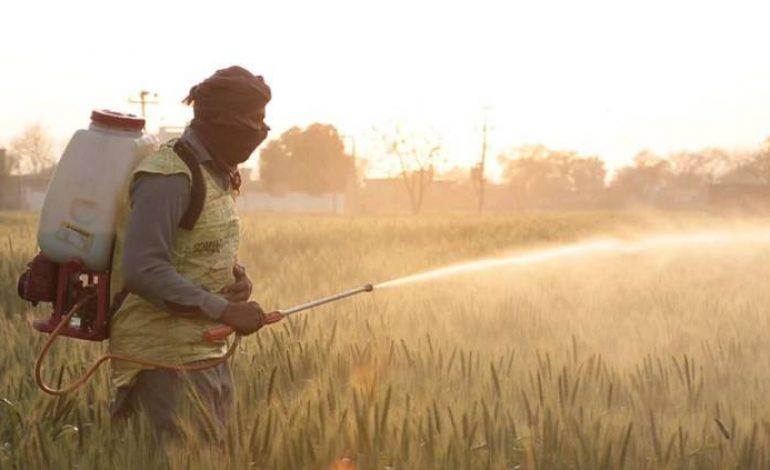 La France et la Suisse exportent un pesticide interdit sur leurs sols vers des pays en développement