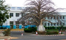 Crime de lèse-baobab par le Dr Amadou Gallo Diop