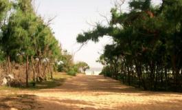 Les maires de Guédiawaye soupçonnés de vouloir spolier des terres avec le déclassement de la bande des filaos