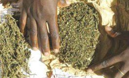 500 kilos de chanvre indien saisis à Keur Saloum Diané à Fatick