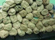 Importante saisie de 57 kg de chanvre indien par la Brigade régionale des stupéfiants de Thiès