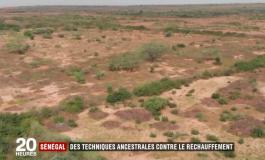 Des techniques ancestrales permettent le retour de l'agriculture au Sénégal