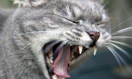 Un chat se nourrit de la dépouille d'une septuagénaire décédée depuis 2 mois