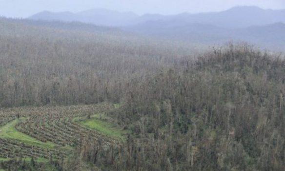 L'Australie veut planter un milliard d'arbres d'ici à 2030