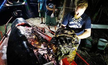 Une baleine meurt avec 40 kg de plastique dans l'estomac aux Philippines