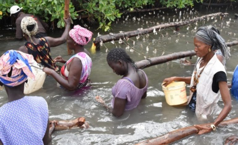 Le canton de Genève s'engage pour la protection des mangroves au Sénégal