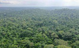 Et si on plantait des millions d'arbres pour lutter contre le réchauffement climatique ?