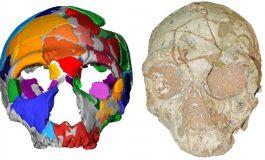 Le plus vieil Homo sapiens non africain a été retrouvé