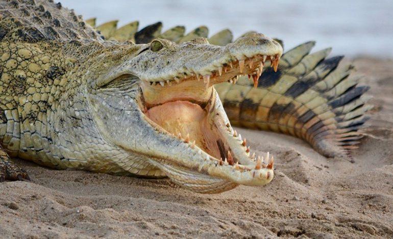 Son chien se fait happer par un crocodile sous ses yeux