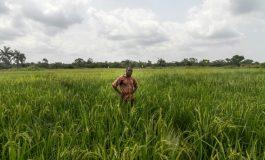 Le village de Daga Birame à l'heure de l'agriculture intelligente