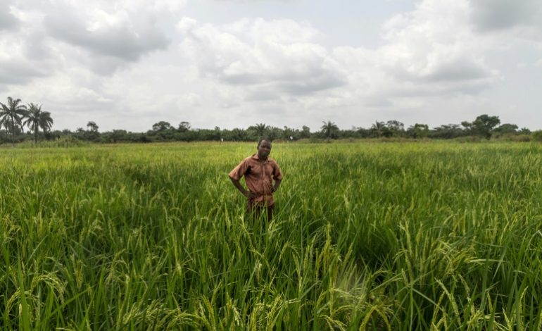 La FAO et l'UA publient un guide pour stimuler le commerce intra-africain des produits agricoles
