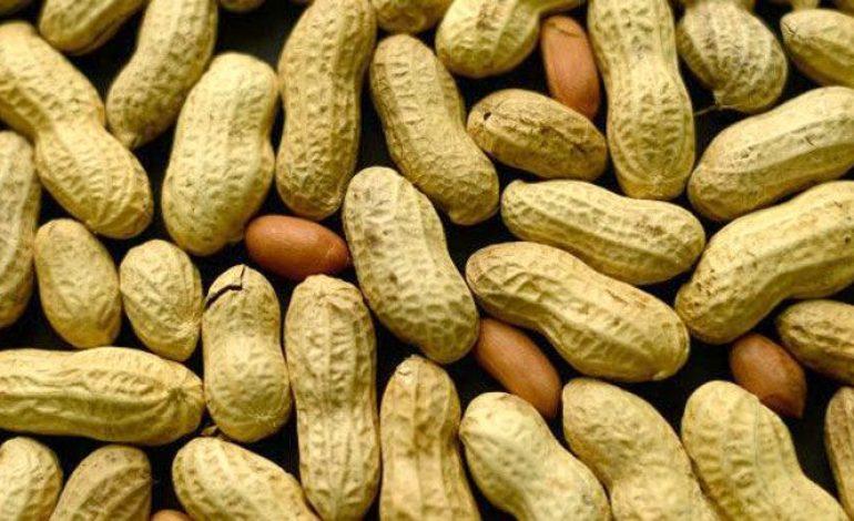 La Chine demeure en tête des clients du Sénégal pour l'arachide et ses dérivés