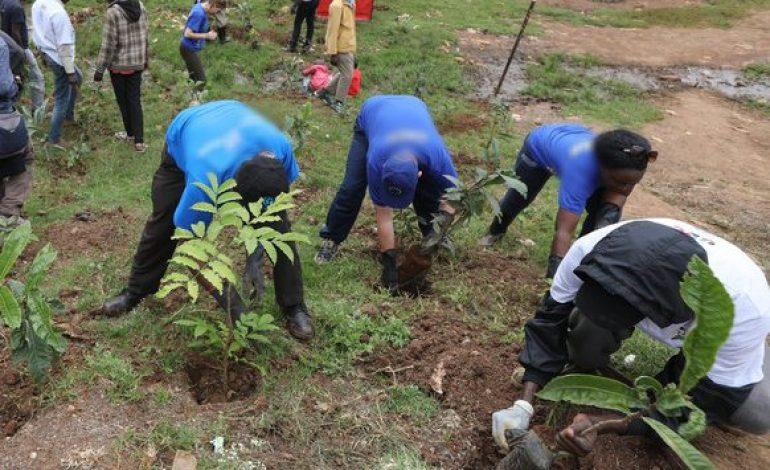 10 jeunes seront recrutés pour le reboisement de 2 millions d'hectares au Sénégal