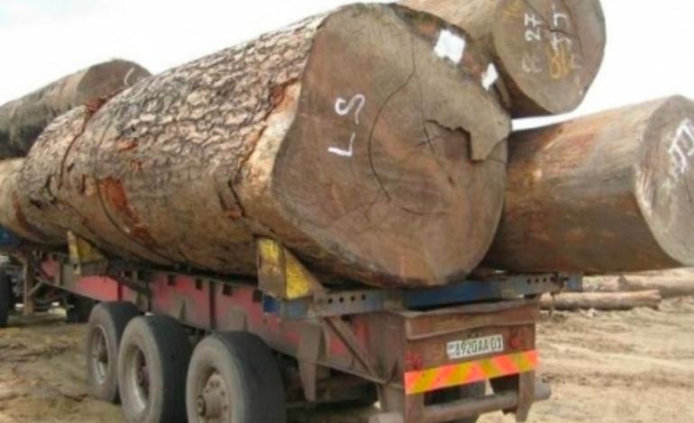Macky Sall n'écarte pas un durcissement des peines contre les trafiquants de bois