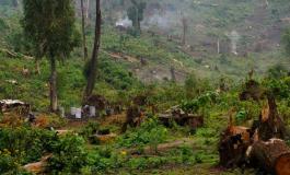 En raison du changement climatique, une grande partie de la forêt amazonienne émet désormais du CO2 au lieu d'en absorber
