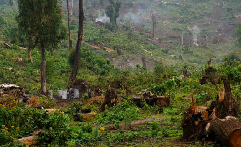 Le Gabon reçoit des fonds pour ses efforts contre la déforestation