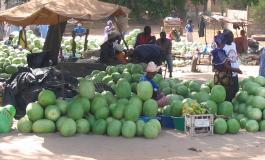 Le Maroc et le Sénégal demeurent les principaux fournisseurs de pastèques à l'Espagne