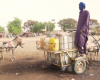 Les éleveurs peuls du Sénégalais durement touchés par les mesures sanitaires