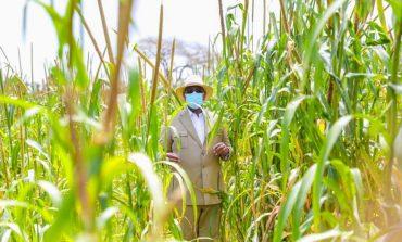 Macky Sall invite le secteur privé à investir dans la filière lait pour assurer l'autosuffisance du Sénégal