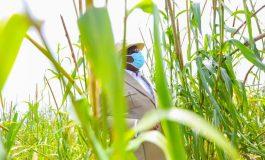 Macky Sall mise sur la culture du riz de plateau pour l'autosuffisance au Sénégal