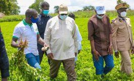 Macky Sall souligne l'importance pour les producteurs de constituer des coopératives agricoles