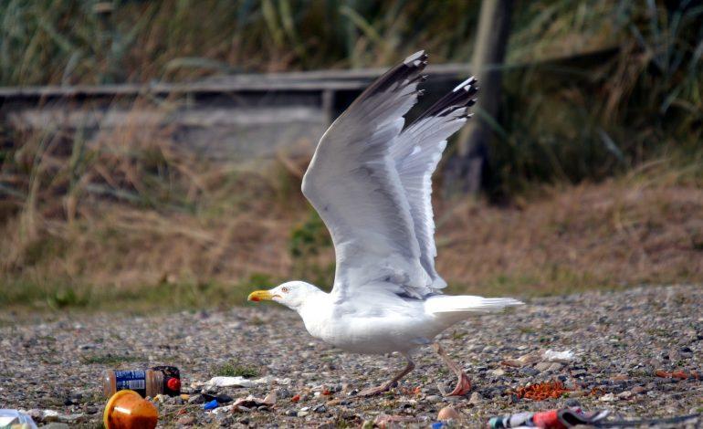 Sacs plastiques, lignes de pêche, emballages alimentaires : le catalogue des plastiques qui étouffent les animaux marins