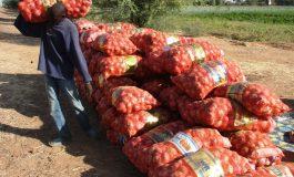 Le Sénégal ferme ses frontières le 31 décembre aux importations d'oignons néerlandais pour encourager la production locale.