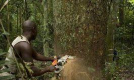 Neuf exploitants forestiers appréhendés, violentés et dépossédés par des hommes armés à Bayotte-Est (Casamance)