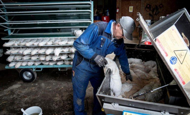 Après la Mauritanie, la Gambie et le Mali, le Burkina Faso suspend l'importation de la volaille en provenance du Sénégal