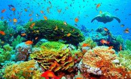 14% du corail dans le monde a disparu entre 2009 et 2018