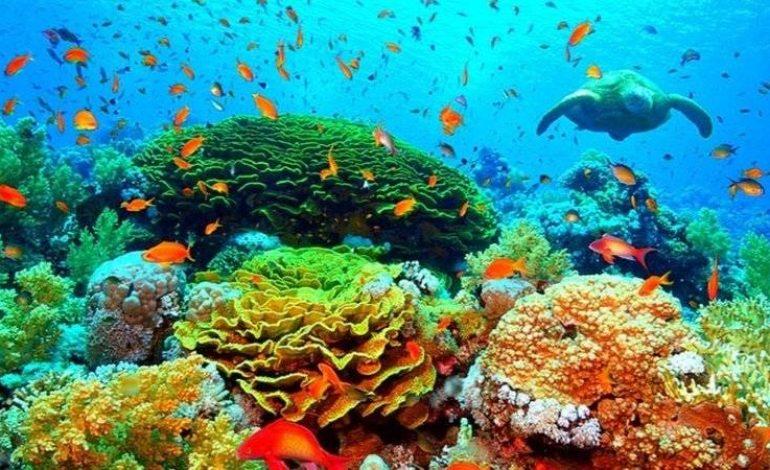 Des techniques pour «ralentir de 20 ans» la disparition de la Grande Barrière de corail