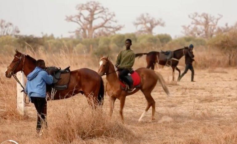 La passion des courses hippiques suscite des vocations chez les jeunes Sénégalais