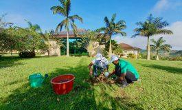 Le Ghana plante 5 millions d'arbres dans une campagne de reforestation