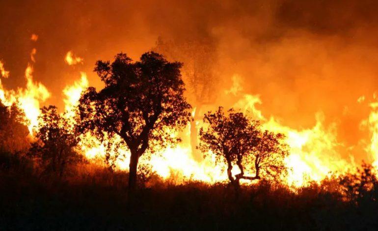 Cinq morts dans des incendies au nord de l'Algérie, notamment en Kabylie